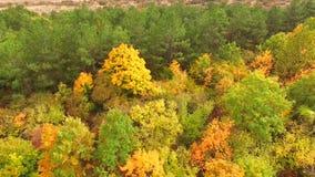 Siluetta dell'uomo Cowering di affari Alberi multicolori in parco in autunno video d archivio