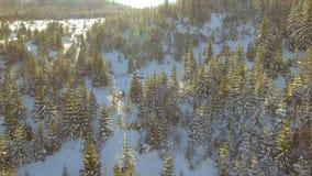 Siluetta dell'uomo Cowering di affari Bello paesaggio della neve Sorvoli gli alberi coperti di neve archivi video