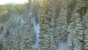 Siluetta dell'uomo Cowering di affari Bello paesaggio della neve Sorvoli gli alberi coperti di neve video d archivio