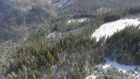 Siluetta dell'uomo Cowering di affari Bello paesaggio della neve Sorvoli gli alberi coperti di neve stock footage