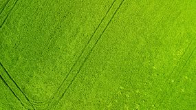 Siluetta dell'uomo Cowering di affari Campo verde di agricoltura da sopra Fotografia Stock
