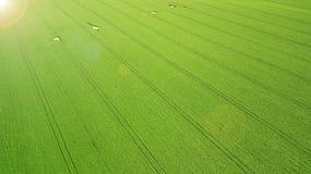 Siluetta dell'uomo Cowering di affari Campo verde di agricoltura da sopra Immagini Stock