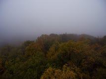 Siluetta dell'uomo Cowering di affari Nebbia di mattina sopra la foresta Fotografia Stock Libera da Diritti