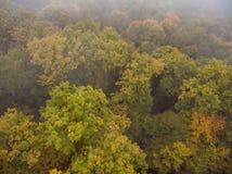 Siluetta dell'uomo Cowering di affari Nebbia di mattina sopra la foresta Immagine Stock Libera da Diritti