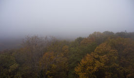 Siluetta dell'uomo Cowering di affari Nebbia di mattina sopra la foresta Fotografie Stock