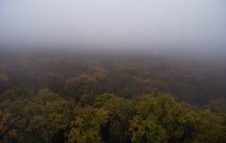 Siluetta dell'uomo Cowering di affari Nebbia di mattina sopra la foresta Immagini Stock