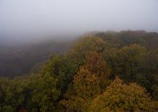 Siluetta dell'uomo Cowering di affari Nebbia di mattina sopra la foresta Fotografie Stock Libere da Diritti