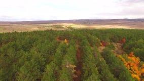 Siluetta dell'uomo Cowering di affari Parco verde del pino ad Autumn In Suburbs stock footage