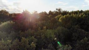 Siluetta dell'uomo Cowering di affari Sorvolare i bei alberi di autunno nel colpo della camera aerea della foresta Paesaggio cadu stock footage