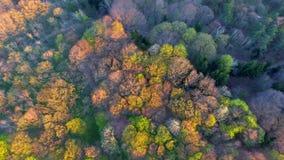 Siluetta dell'uomo Cowering di affari Sorvolare i bei alberi forestali Colpo della camera aerea stock footage
