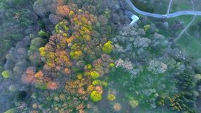 Siluetta dell'uomo Cowering di affari Sorvolare i bei alberi forestali Colpo della camera aerea paesaggio stock footage