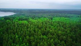 Siluetta dell'uomo Cowering di affari Sorvolare i bei alberi forestali Colpo della camera aerea Panorama del paesaggio archivi video