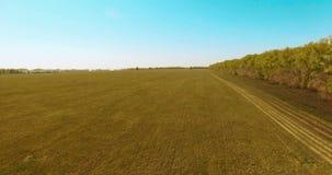 Siluetta dell'uomo Cowering di affari Volo basso sopra il giacimento rurale del grano verde e giallo Immagini Stock