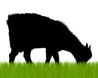 Siluetta della capra Fotografie Stock