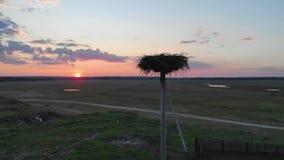 Siluetta della cicogna nel loro nido contro un tramonto magico stock footage