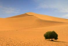 Siluetta della duna del deserto Fotografie Stock Libere da Diritti