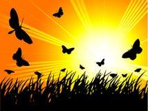 Siluetta della farfalla Fotografia Stock