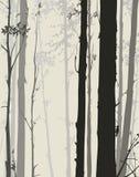 Siluetta della foresta Fotografia Stock