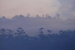 Siluetta della foresta in nebbia densa fotografie stock libere da diritti