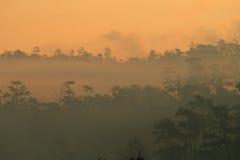 Siluetta della foresta in nebbia densa immagini stock