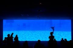 Siluetta della gente che cerca rappresentazione del delfino immagini stock libere da diritti