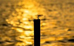 Siluetta della libellula Fotografia Stock