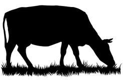 Siluetta della mucca che mangia erba Fotografie Stock