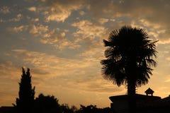 Siluetta della palma fotografie stock