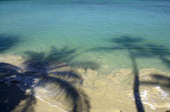 Siluetta della palma Immagini Stock