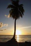 Siluetta della palma Fotografie Stock Libere da Diritti