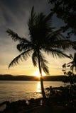Siluetta della palma ad alba, spiaggia di Las Galeras Fotografie Stock