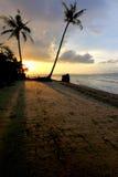 Siluetta della palma ad una spiaggia Fotografie Stock Libere da Diritti