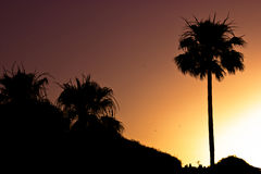 Siluetta della palma al tramonto Immagini Stock