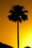 Siluetta della palma al tramonto Fotografia Stock