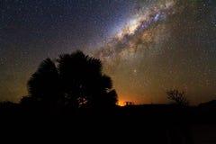 Siluetta della palma della Via Lattea fotografia stock