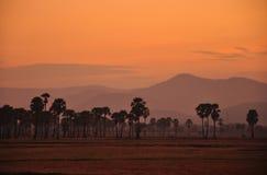 Siluetta della palma nell'ambito del tramonto fotografia stock