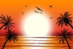 Siluetta della palma sulla spiaggia Immagine Stock