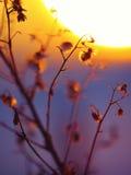 Siluetta della pianta di inverno al tramonto Immagini Stock Libere da Diritti