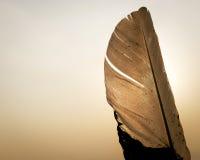 Siluetta della piuma sull'insieme del sole Fotografia Stock