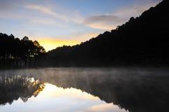 Siluetta della riflessione della foresta tropicale Fotografia Stock Libera da Diritti
