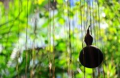 Siluetta della zucca o della zucca a fiaschetta asciutta nel giardino immagine stock