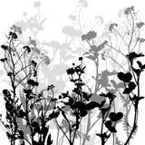 Siluetta delle erbe e dei fiori Fotografie Stock