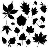 Siluetta delle foglie Fotografia Stock