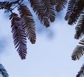 Siluetta delle foglie contro il cielo immagine stock