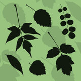 Siluetta delle foglie delle specie differenti di alberi Immagine Stock Libera da Diritti