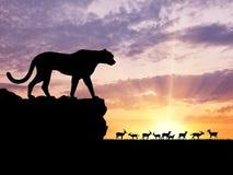 Siluetta delle gazzelle di una caccia del ghepardo immagini stock