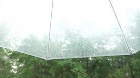 Siluetta delle gocce di pioggia su un ombrello trasparente, vista da sotto l'ombrello sugli alberi verdi nella pioggia 4k, lento stock footage