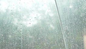 Siluetta delle gocce di pioggia su un ombrello trasparente, vista da sotto l'ombrello sugli alberi verdi nella pioggia 4k, lento archivi video