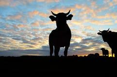 Siluetta delle mucche Immagini Stock Libere da Diritti