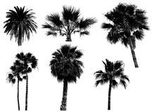 Siluetta delle palme Fotografia Stock